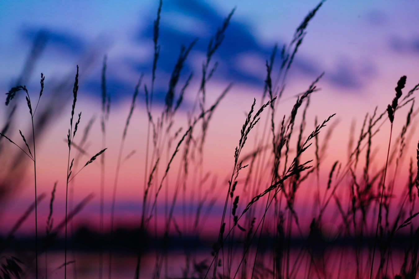 Apus in Bucuresti - Insula Lacul Morii, spic de grau