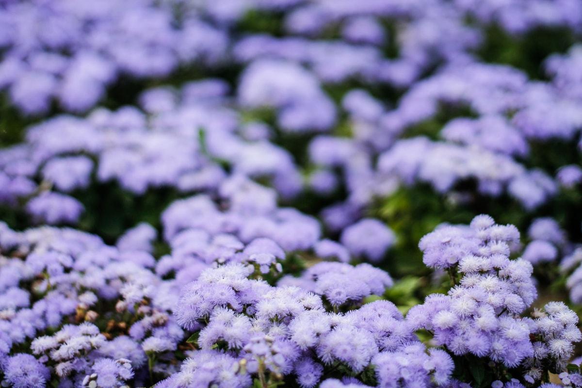 Parc Lunca Argesului - flori mov