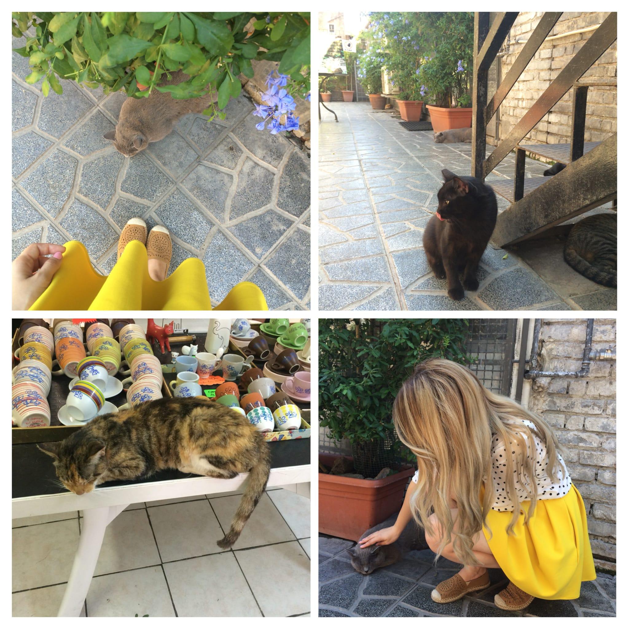 sanctuarul pisicilor, roma