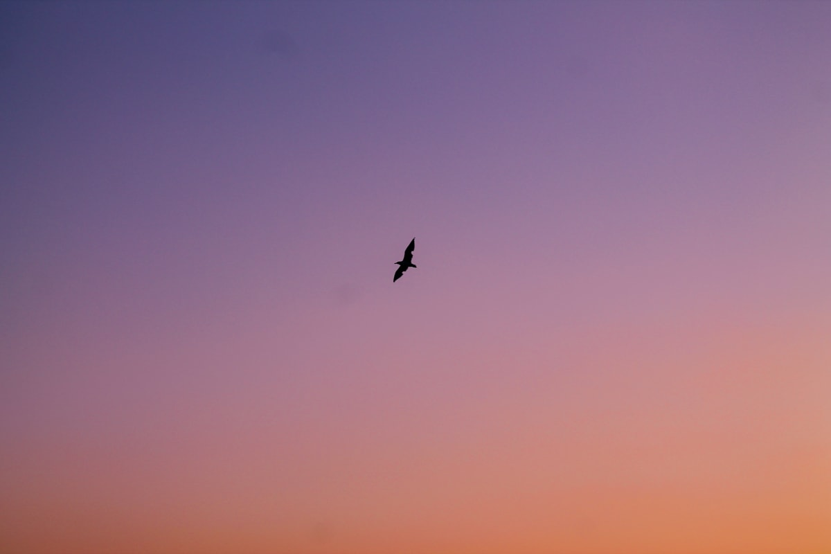 bird in the sky, sunset